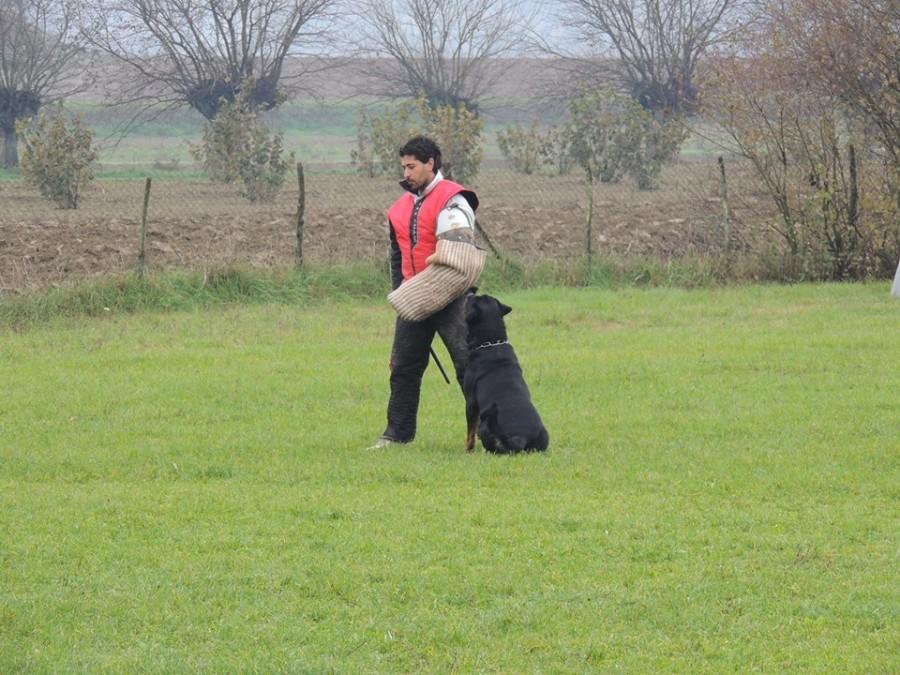 """""""aus der Krummholz"""" Addestramento cani Torino Piemonte – Allevamento Rottweiler Malinois"""