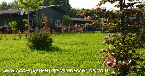 """""""aus der Krummholz - La Tana dei Lupi"""" Allevamento( Rottweiler Malinois) Addestramento Pensione cani Torino Piemonte Centro Cinofilo riconosciuto E.N.C.I."""