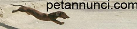 http://www.petannunci.com/