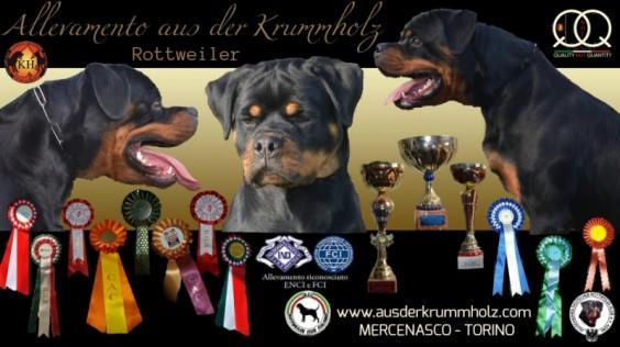 ALLEVAMENTO-ROTTWEILER-TORINO-AUS-DER-KRUMMHOLZ | YouTube-Rottweiler-AUS-DER-KRUMMHOLZ