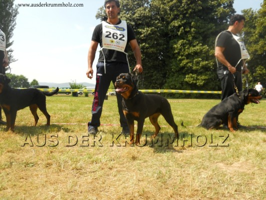 Rottweiler IFR World Dog Show 2014