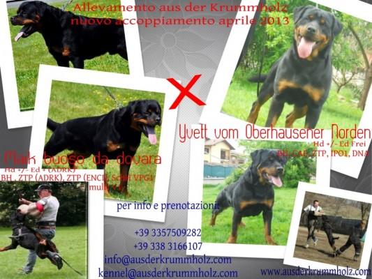 Maik Buoso da Dovara x Yvett vom Oberhausener Norden