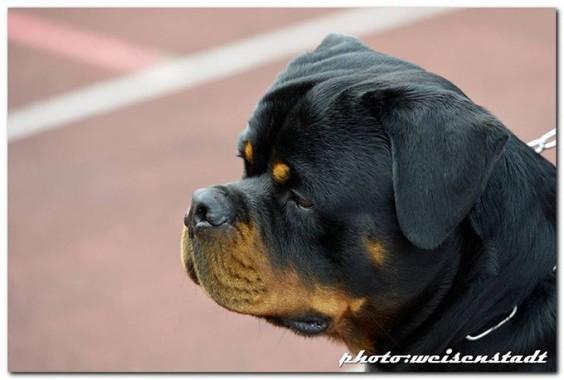Centro Cinofilo La Tana dei Lupi - Addestramento e Pensione cani a Torino