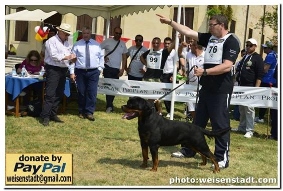 """""""La Tana dei Lupi – aus der Krummholz"""" Allevamento( Rottweiler Malinois) Addestramento Pensione cani Torino Piemonte Centro Cinofilo riconosciuto E.N.C.I."""