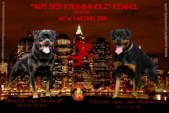 ** NUOVO ACCOPPIAMENTO ** Febbraio 2015 – Arnold von Brukroft x Firenze aus der Krummholz