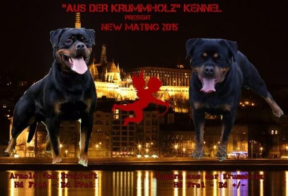 ** NUOVO ACCOPPIAMENTO ** Marzo 2015 – Arnold von Brukroft x Hondra aus der Krummholz