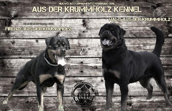 """""""NUOVO ACCOPPIAMENTO – FEBBRAIO 2016″ Halo aus der Krummholz x Firenze aus der Krummholz"""
