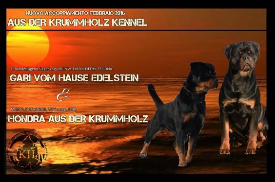 """""""NUOVO ACCOPPIAMENTO – FEBBRAIO 2016″ Gari vom Hause Edelstein x Hondra aus der Krummholz"""