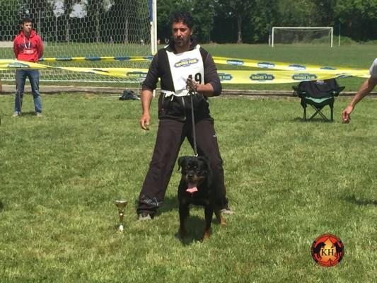 Raduno Rottweiler di Lombardia – 08/05/2016
