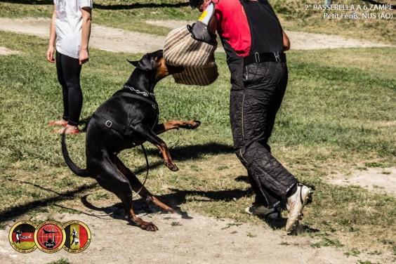 Addestramento cani Torino Ivrea Piemonte Centro Cinofilo