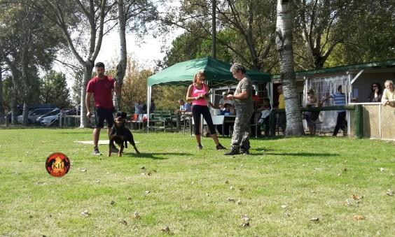 Firenze aus der Krummholz supera brillantemente la Prova di Selezione Rottweiler – ZTP -