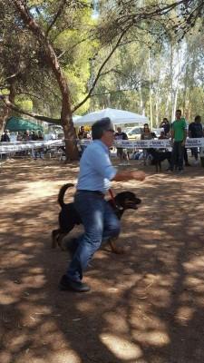 Allevamento Rottweiler