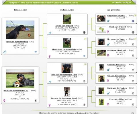 Allevamento Rottweiler Professionale