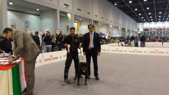 """""""ESPOSIZIONE ROTTWEILER MIGLIORE DI RAZZA"""" Esposizione Speciale Rottweiler"""
