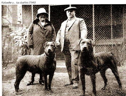 Storia Rottweiler Allevamento aus der Krummholz Rottweiler Club Italiano