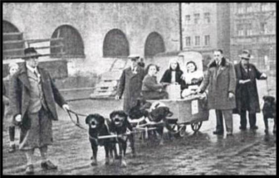 Origini Rottweiler Allevamento aus der Krummholz Rottweiler Club Italiano
