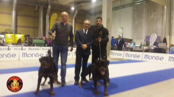AUS DER KRUMMHOLZ ALLEVAMENTO ROTTWEILER TORINO www.ausderkrummholz.com - www.addestramentopensionecanitorino.it