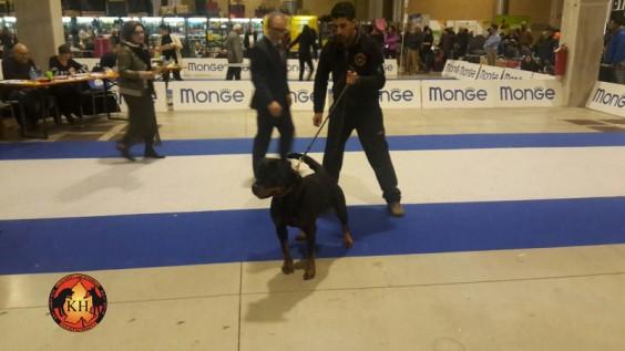 ALLEVAMENTO ROTTWEILER AUS DER KRUMMHOLZ- Esposizione Rottweiler Migliore di Razza 4 soggetti sul Podio