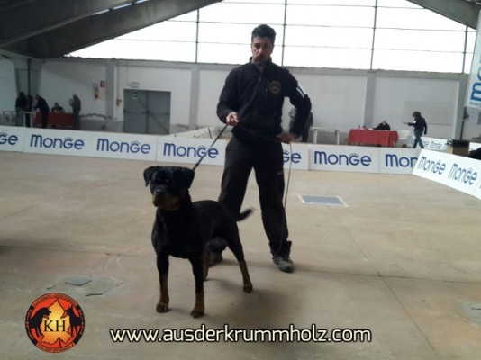 ALLEVAMENTO ROTTWEILER PIEMONTE-Esposizione Rottweiler aus der Krummholz