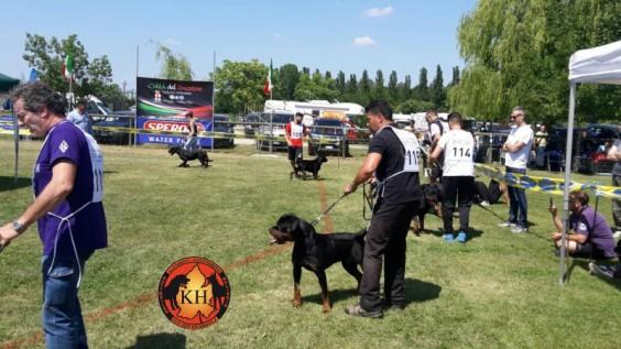 Rottweiler Raduno di Razza Reggio nell'Emilia – 21/05/2017