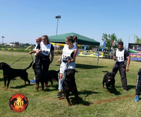 Migliore Allevamento Rottweiler Torino Piemonte-AUS DER KRUMMHOLZ Rottweiler Allevamento Mercenasco Torino 11