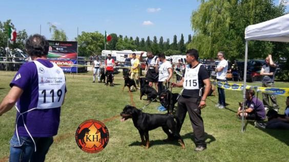Migliore Allevamento Rottweiler Torino Piemonte-AUS DER KRUMMHOLZ Rottweiler Allevamento Mercenasco Torino 2
