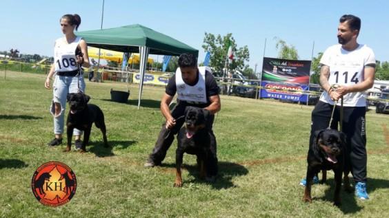 MIGLIOR ALLEVAMENTO ROTTWEILER TORINO PIEMONTE-AUS DER KRUMMHOLZ Rottweiler Raduno di Razza Reggio nell'Emilia