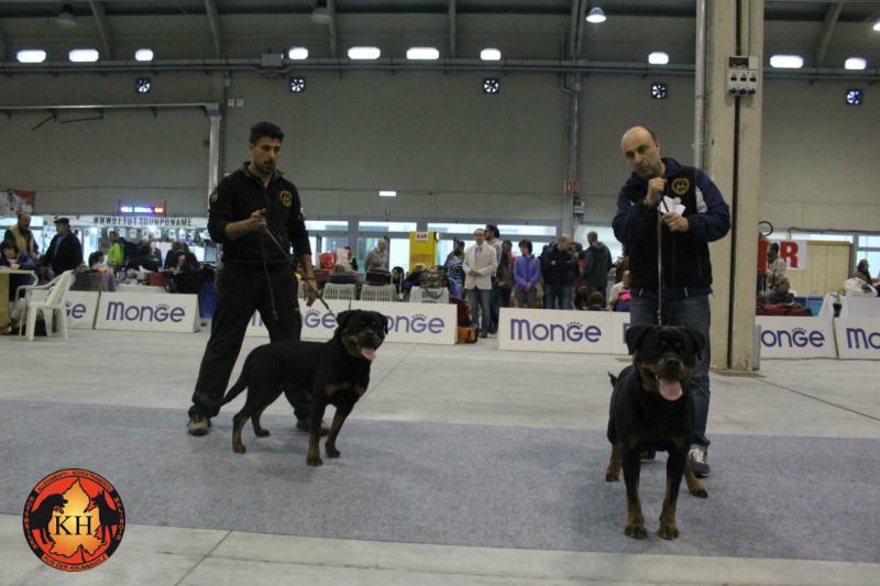 Migliore Allevamento Rottweiler Torino Piemonte-AUS DER KRUMMHOLZ Rottweiler Mercenasco Torino 3