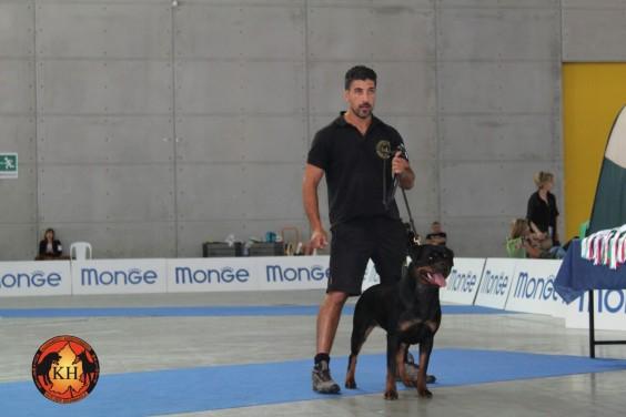 AUS DER KRUMMHOLZ Rottweiler Mercenasco Torino-Migliore Allevamento Rottweiler Torino Piemonte 4