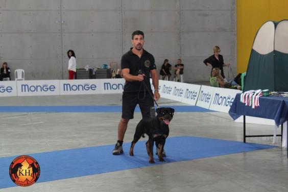 AUS DER KRUMMHOLZ Rottweiler Mercenasco Torino-Migliore Allevamento Rottweiler Torino Piemonte 6