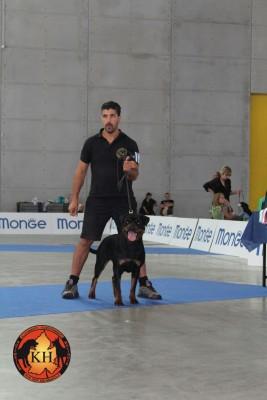 AUS DER KRUMMHOLZ Rottweiler Mercenasco Torino-Migliore Allevamento Rottweiler Torino Piemonte 7