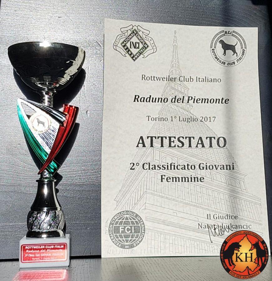 Allevamento Rottweiler Torino Piemonte-AUS DER KRUMMHOLZ Rottweiler Mercenasco Torino 1