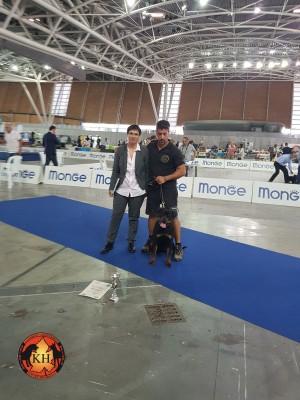 Allevamento Rottweiler Torino Piemonte-AUS DER KRUMMHOLZ Rottweiler Mercenasco Torino 3