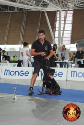 Allevamento Rottweiler Torino Piemonte-AUS DER KRUMMHOLZ Rottweiler Mercenasco Torino 7