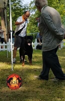 Rottweiler Allevamento Torino Piemonte-Rottweiler AUS DER KRUMMHOLZ Mercenasco Torino --
