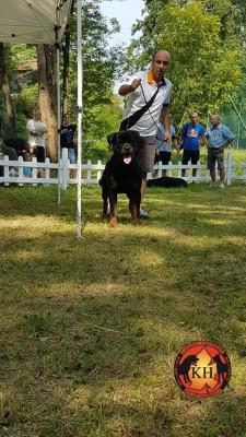 Rottweiler Allevamento Torino Piemonte-Rottweiler AUS DER KRUMMHOLZ Mercenasco Torino ---