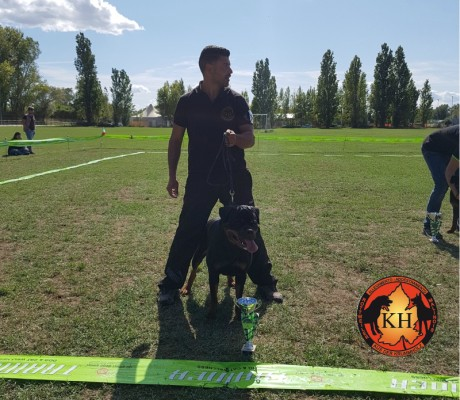 ROTTWEILER VENDITA CUCCIOLI TAGLIA GRANDE PURA RAZZA-Rottweiler Allevamento Torino Piemonte 2