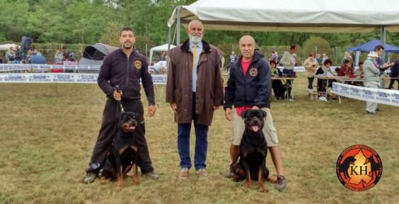 ROTTWEILER VENDITA CUCCIOLI TAGLIA GRANDE PURA RAZZA-Rottweiler Allevamento Torino Piemonte 3