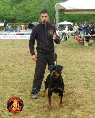 ROTTWEILER VENDITA CUCCIOLI TAGLIA GRANDE PURA RAZZA-Rottweiler Allevamento Torino Piemonte 4