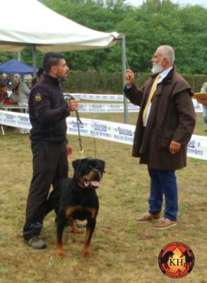ROTTWEILER VENDITA CUCCIOLI TAGLIA GRANDE PURA RAZZA-Rottweiler Allevamento Torino Piemonte 5