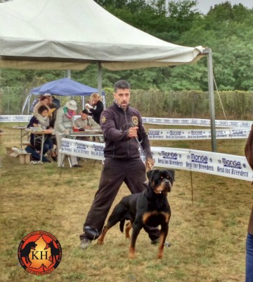 ROTTWEILER VENDITA CUCCIOLI TAGLIA GRANDE PURA RAZZA-Rottweiler Allevamento Torino Piemonte 6