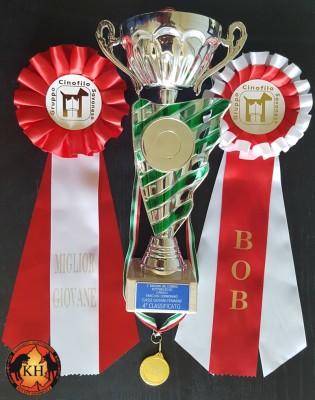ROTTWEILER AUS DER KRUMMHOLZ PIEMONTE|Rottweiler Allevamento Torino|Rottweiler Esposizione Raduno Rottweiler
