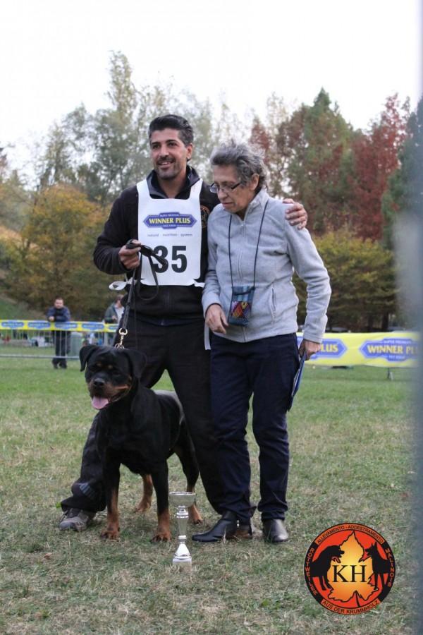 Migliore Allevamento Rottweiler Piemonte-Rottweiler Mercenasco Torino AUS DER KRUMMHOLZ –