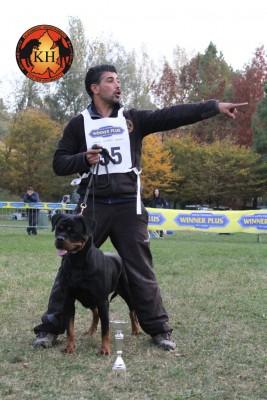 Migliore Allevamento Rottweiler Piemonte-Rottweiler Mercenasco Torino AUS DER KRUMMHOLZ --