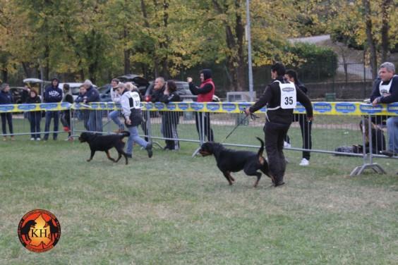 Migliore Allevamento Rottweiler Piemonte-Rottweiler Mercenasco Torino AUS DER KRUMMHOLZ ----
