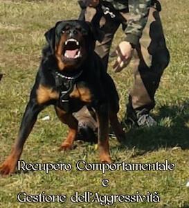 gestione_aggressivita