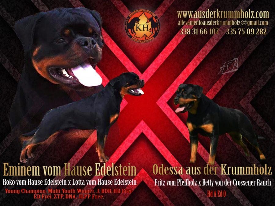MIGLIORE ALLEVAMENTO ROTTWEILER PIEMONTE-Rottweiler aus der Krummholz 2