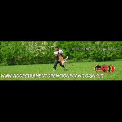 Utilità e Difesa  Preparazione Brevetti Sportivi