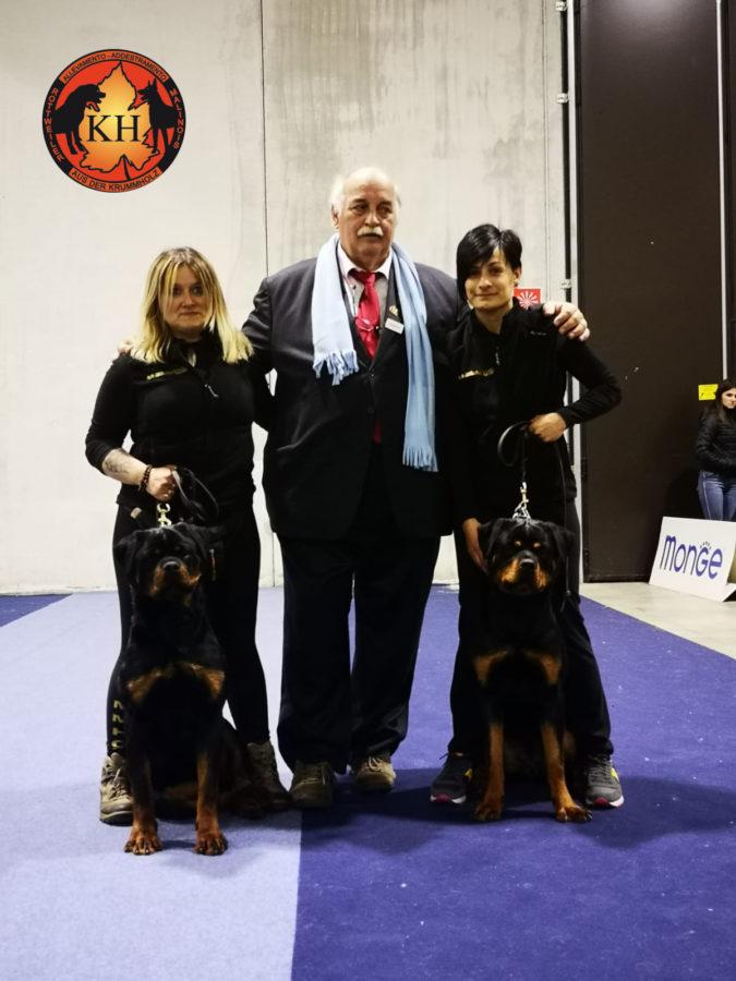 Rottweiler dell'Allevamento AUS DER KRUMMHOLZ a Mercenasco sbancano all'Esposizione di Razza Rottweiler di Biella