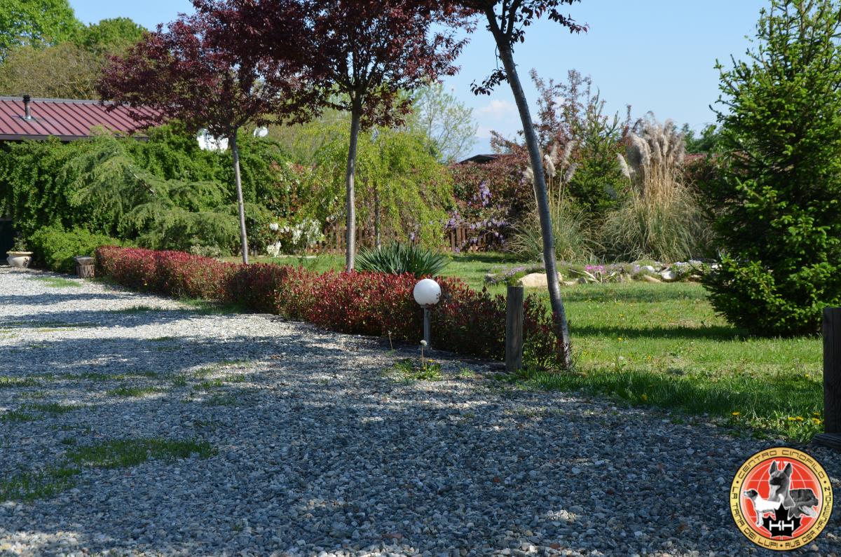 Centro Cinofilo LA TANA DEI LUPI Allevamento Rottweiler e Malinois Addestramento Cani Multi Razza Pensione Cani e Gatti a Mercenasco Torino Piemonte 7